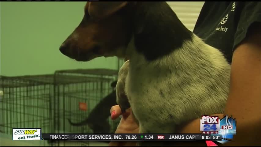 Sebastian County Animal Shelter 6-28_09717738-159532