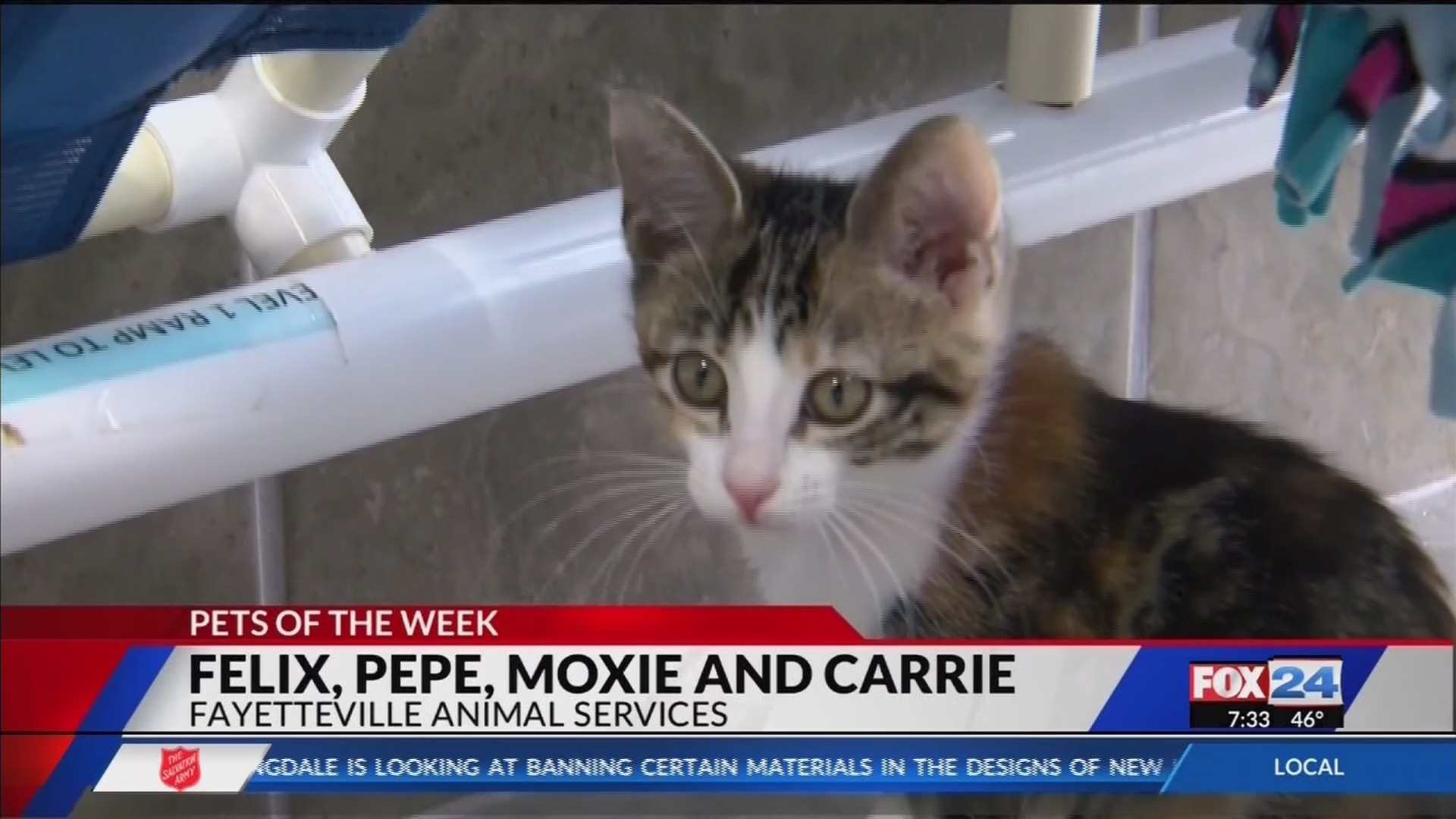 Pet_of_the_Week__Felix__Pepe__Moxie_and__0_20181026134530