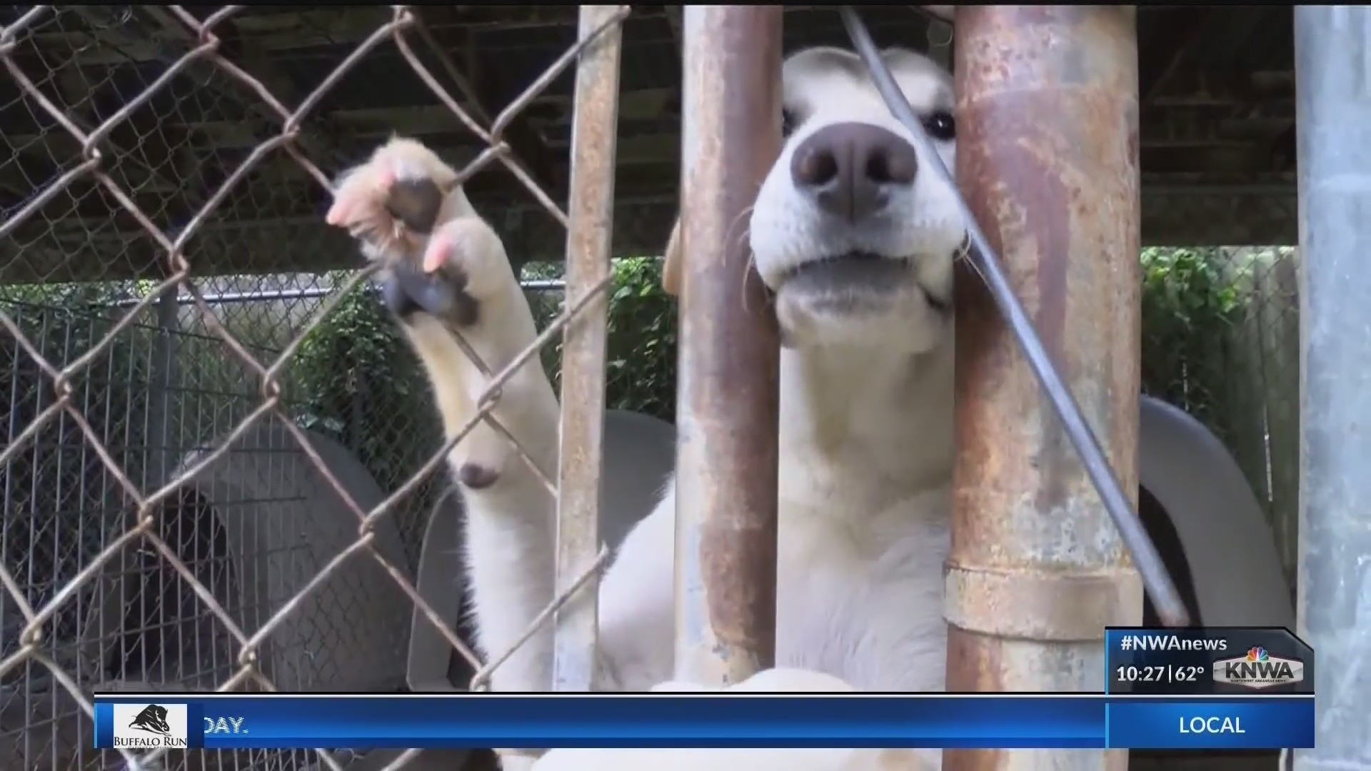Doing_Good__Humane_Society_Drives_Dogs_O_0_20181030033359