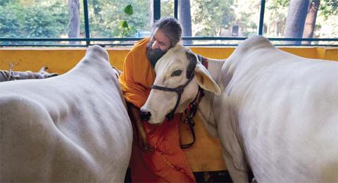 https://i2.wp.com/www.nwasianweekly.com/wp-content/uploads/2015/34_44/world_cows.jpg?resize=480%2C260