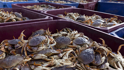 https://i2.wp.com/www.nwasianweekly.com/wp-content/uploads/2015/34_49/com_crab.jpg
