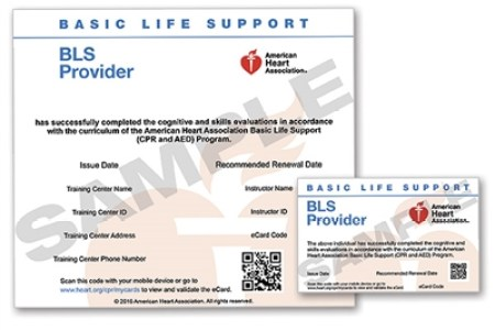Free Resume 2018 » american heart association first aid ...