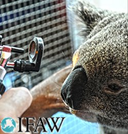 iFAW - Wildlife needs vets
