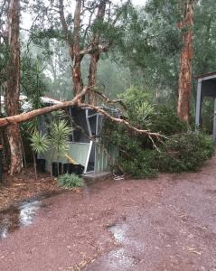 Hunter Koala Preservation Society