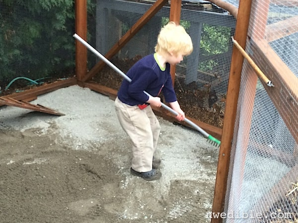 I had help raking out the new sand.