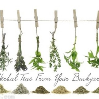 Herbal_Teas_Drying