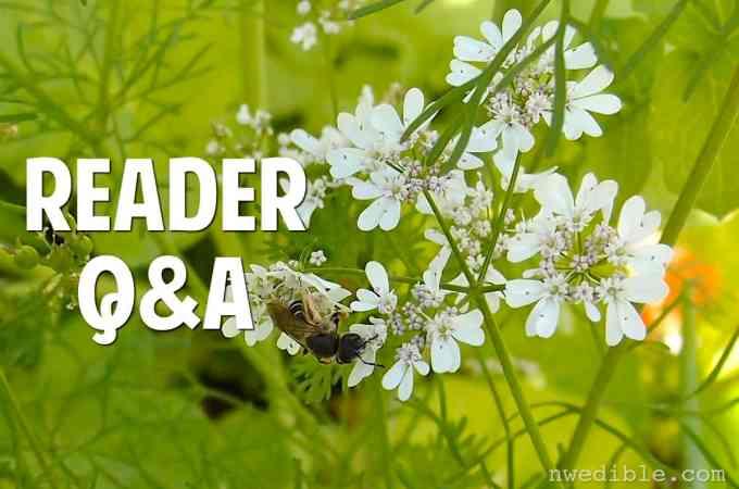 An Impromptu Gardening Q&A