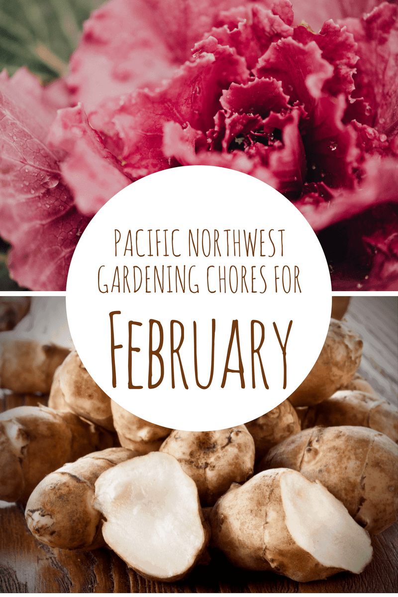february gardening chores for the pacific northwest northwest