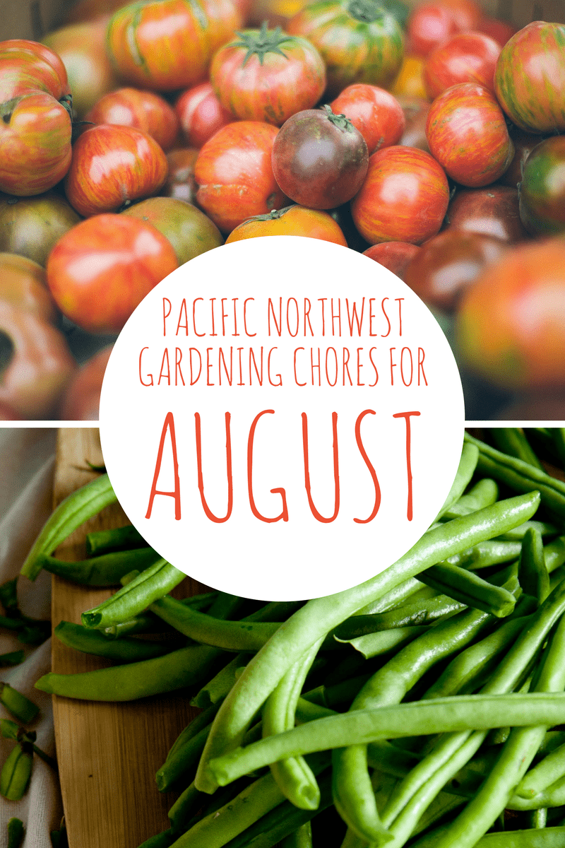 august gardening chores for the pacific northwest northwest