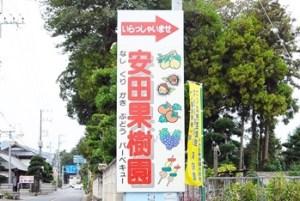 安田果樹園|茨城県の栗拾いが出来るおすすめのスポット