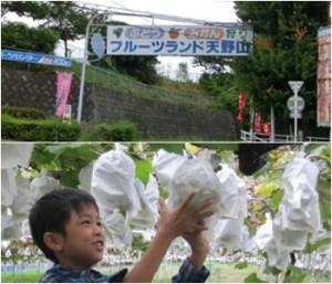 フルーツランド天野山 大阪府のぶどう狩りが出来る農園
