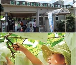 富田林市農業公園サバーファーム|大阪府のぶどう狩りが出来る農園