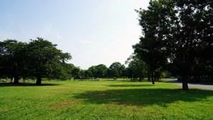 江戸川区花火大会の穴場スポット|篠崎公園
