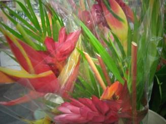 Tropical Bouquet Asst.