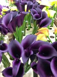 Purple/Black Mini