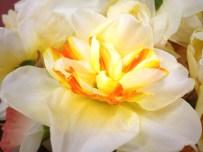 White/Yellow/Orange