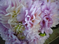 Lavender/White