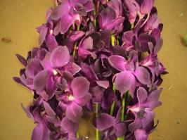 Purple (Thai)