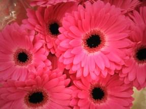 Hot Pink Mini