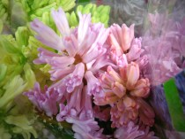 images_fresh_hyacinth_pinky