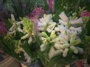 images_fresh_hyacinth_white_3
