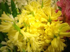 images_fresh_hyacinth_yellow