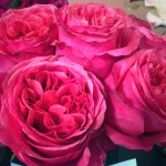 Hot Pink Campenella