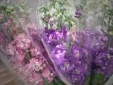 Pink & Purple