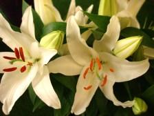 White Oriental