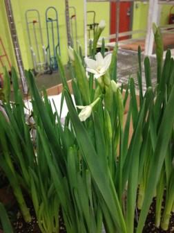 """Narcissus 6"""""""