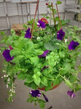 Hanging Garden Basket