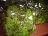 Reindeer Moss (Bright Green)