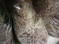 Spanish Moss (Grey)