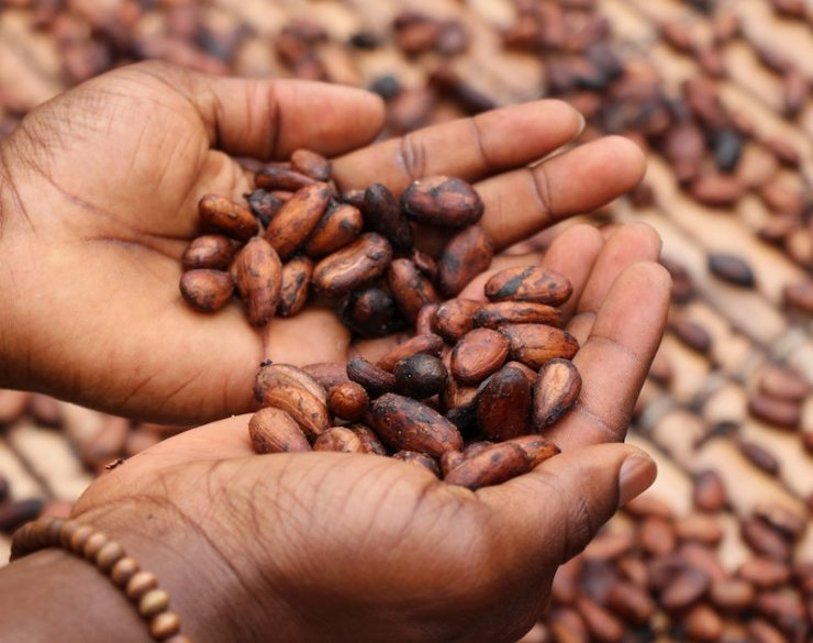 VegNews.Cacaobeans