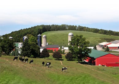 Hourigan Dairy Farms