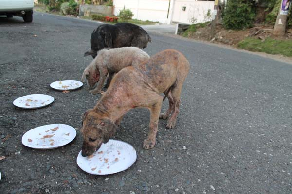The puppies were starving and seemingly infected with mange.