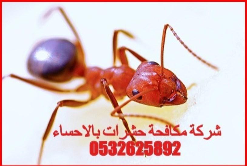 شركة مكافحة الحشرات بالاحساء 0532625892
