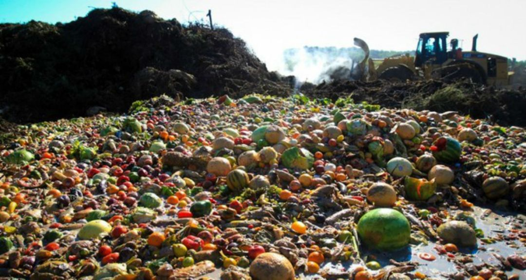 Down the Rabbit Hole: Why Measuring Food Waste Is So ConfusingNYC ...