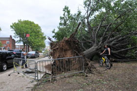 Passersby looks at the roots of a gigantic uprooted tree
