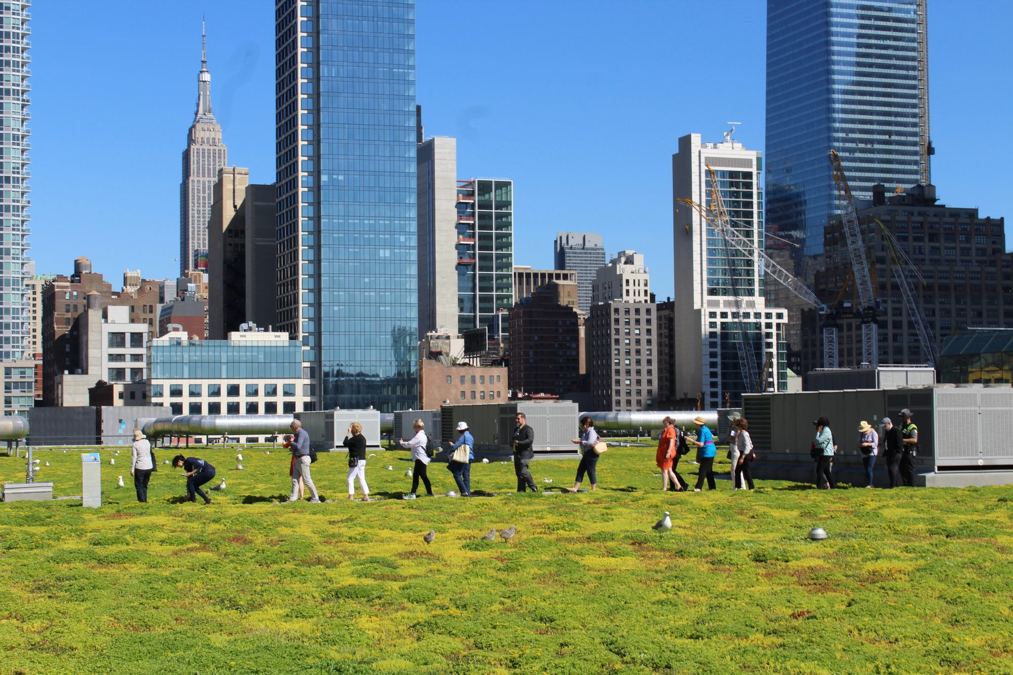Donors and staff walk across the grassy floor of the Javits Center green roof.