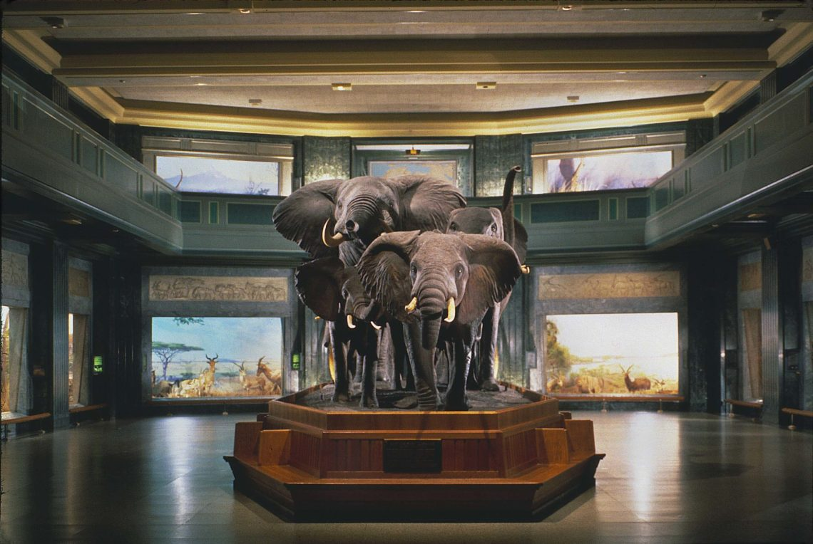 A Family Visit to the American Museum of Natural History - NYC