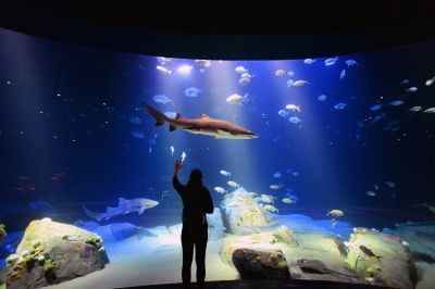Jaw-dropping shark exhibit coming soon to New York ...