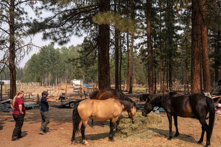 Veterinarian Tawnia Shaw, left, and Chris George with The Happy Pet Vet team examine horses that had been left during a Level 3 evacuation during the Bootleg Fire on Tuesday, July 13, 2021, near Sprague River, Ore.