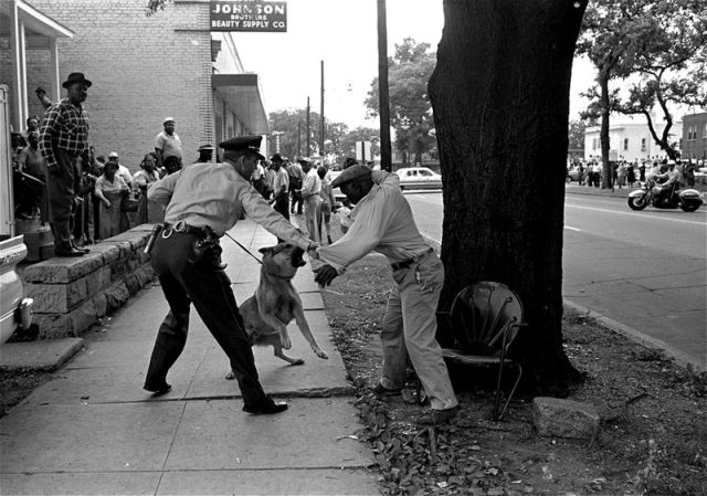 A patrolman and a police dog go after a black man who swings at the dog with a small knife during racial demonstrations in Birmingham.