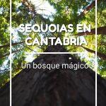 SEQUOIAS EN CANTABRIA, UN BOSQUE MÁGICO