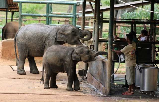 Fun Things to See, Eat and Do in Sri Lanka - Elephant Transit Park