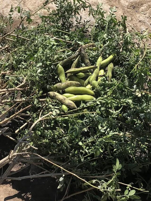 el albergue ollantaytambo - pachamanca beans