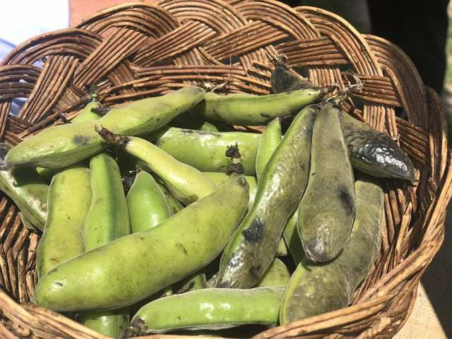 el albergue ollantaytambo - pachamanca peas