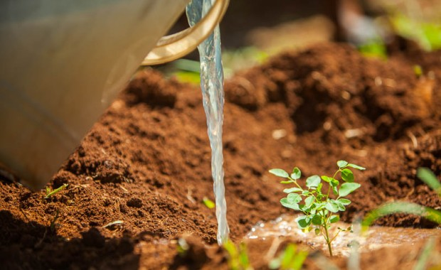 1410_Nyota_Tree_Planting-0518