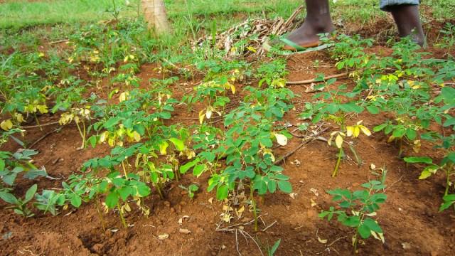 1502_Nyota_Organic_Green_Garden-148